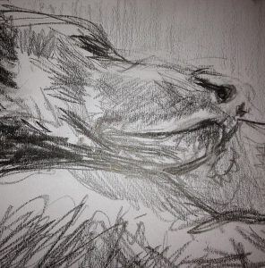 Portriat of sleeping dog. Drawing in graphite.